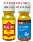 蔬菜蓟马特效药 玫瑰月季蓟马专用药 最好蓟马特效杀虫剂