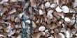 越南原产地长期供应木薯干片,接受预订(不去皮)