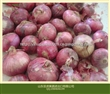 加工出口2014优质红洋葱出口中东、东南亚