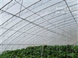 寿光胖龙温室全钢架蔬菜大棚建设