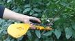 葡萄绑枝机|番茄绑枝机|黄瓜绑枝机|圣女果绑枝机|猕猴桃绑枝机