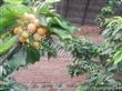 河北大棚智能温控机 蓝莓大棚温度调节厂家