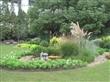 供应青岛三色堇|青岛角堇|青岛三色堇草花|青岛角堇草花|美田园景