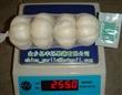 金乡县丰烁果蔬有限公司——中国新鲜的普通白蒜