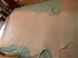 低价供应黄牛树膏皮,水牛树膏皮