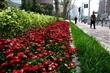 【新设计】青岛花卉景观设计烟台花卉景观设计威海花卉景观设计