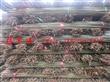 常年供应番茄架 西红柿架 菜架竹