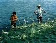 供应稀土超级钙,稀土营养鱼饲料批发133 4718 0372