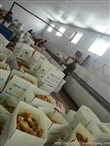 供应出口级保鲜大姜常年供货