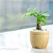 吸甲醛的室内植物