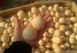 圣诞月 庙会畅销品 鸡蛋葫芦通货 天然葫芦工艺品 招财纳瑞
