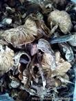 采珍园纯绿色无添加哈尔滨野生有机榛蘑采珍源天然食品有限公司