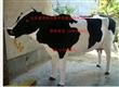 仿真动物模型 金钱豹 雪豹 展示仿真奶牛 毛驴 肉牛 耕牛