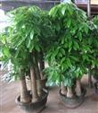 绿色办公室,花卉绿植租售服务,让您轻松拥有,广州租花服务