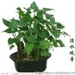 杭州绿佳植物出租 办公室植物租摆