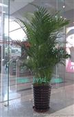 广州租花,办公室绿化