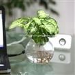 绿意园艺租花服务,绿植买卖租赁,让您的办公区域更显春色