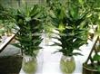 室内景观绿化  办公室植物出租