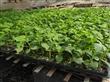 寿光农科种苗有限公司在什么地方/主营哪些品种/价格/质量