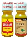 白粉虱特效药  打白粉虱最好的杀虫剂  专杀蓟马