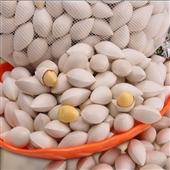 生白果-供应生白果 银杏果 散装1000g  坚果 养生食品批发 -生白果尽在阿...