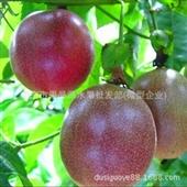 其他未分类-供应批发酸酸甜甜的百香果-其他未分类尽在-南宁市果品源水果批...