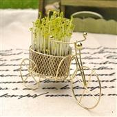 草头娃娃_草头娃娃 地摊工艺品 可种植 微型盆景 单车草娃娃 -